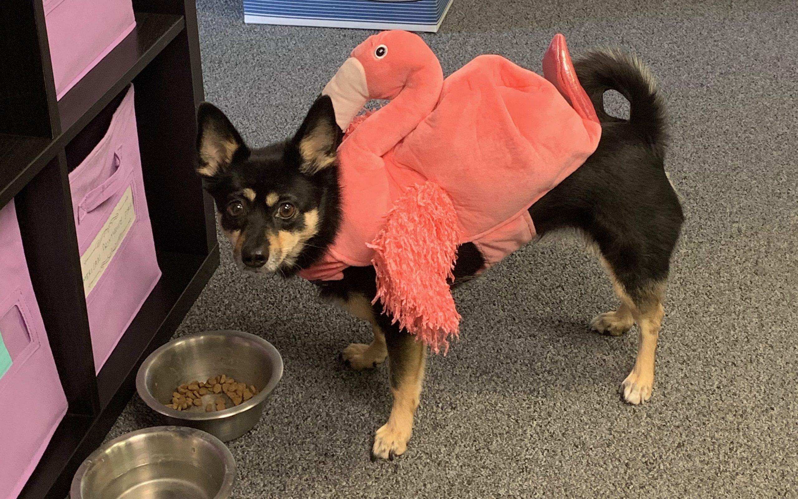 Dog Halloween Costume Flamingo